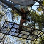 Anastasia on Trapeze II